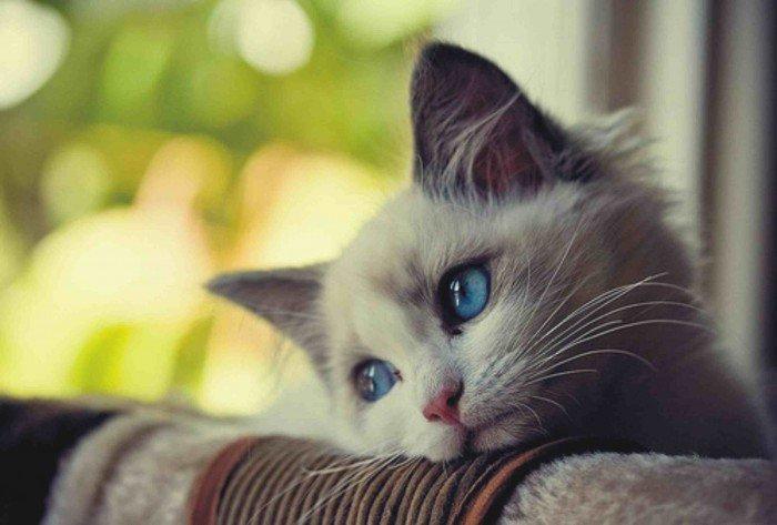 Kediler Neden Mutsuz Olur?
