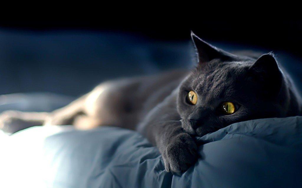 Kedilerle İlgili İlginç Bilgiler