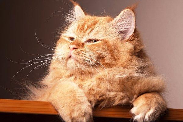 Kedilerle İlgili İlginç Bilgiler II