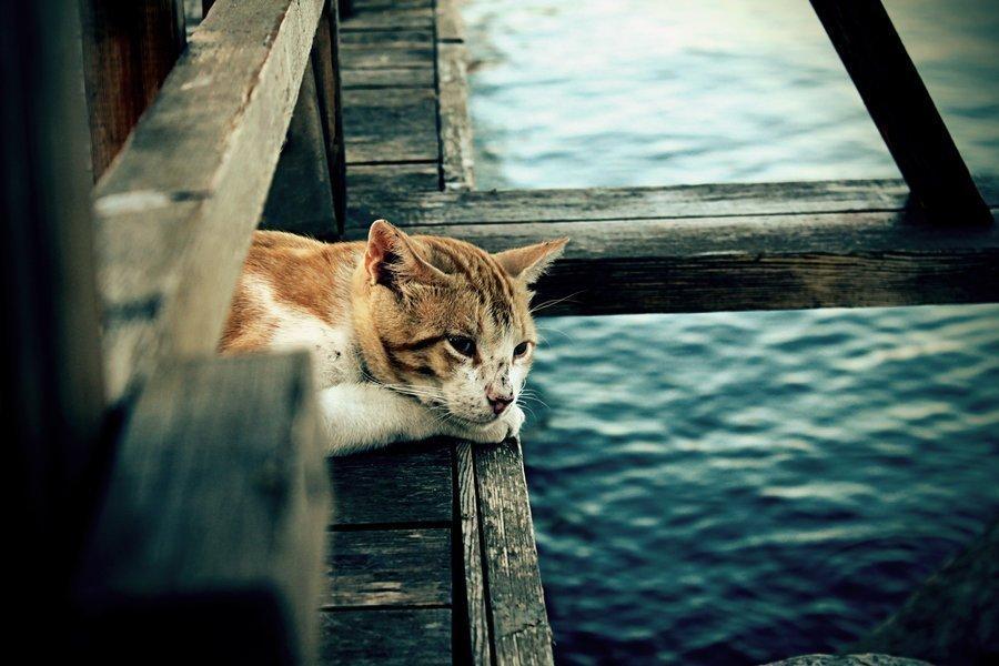 Kediler Neden Çok Miyavlar?