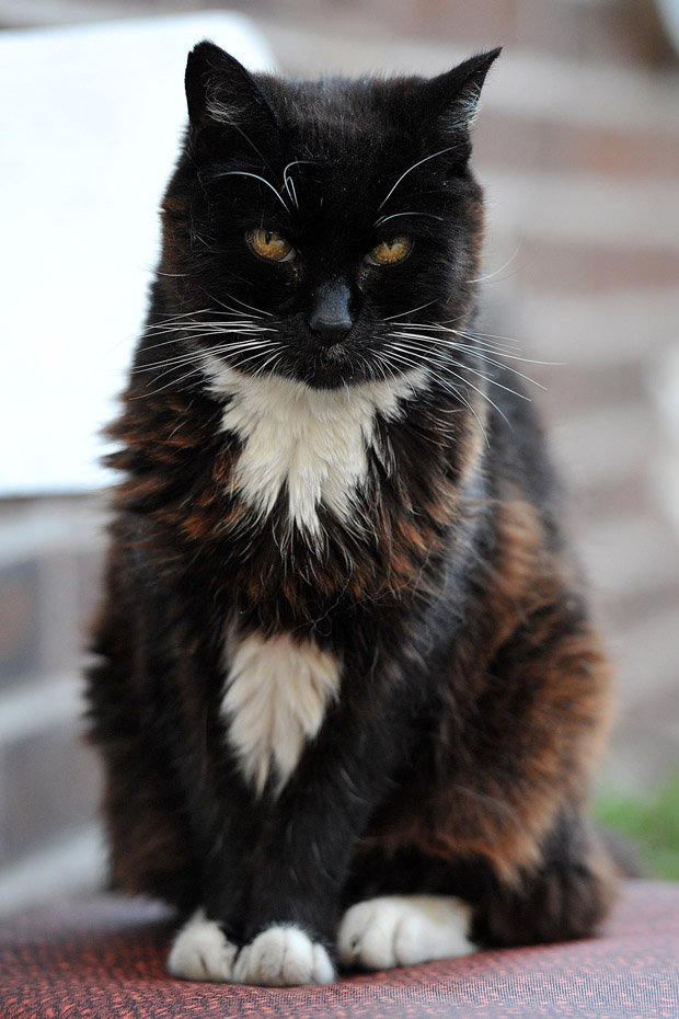 Tarihin en yaşlı kedisi, 28 yıl 3 günlük yaşantısının ardından hayata veda etmiştir.