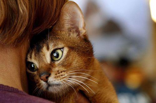Kedilerin İnsanlar Üzerindeki Etkileri