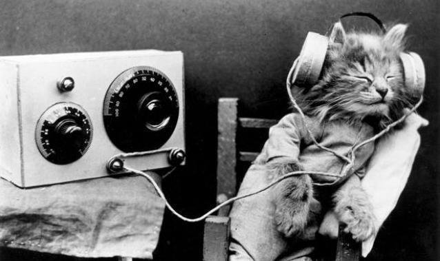 Kedilerin En Sevdiği Müzikler