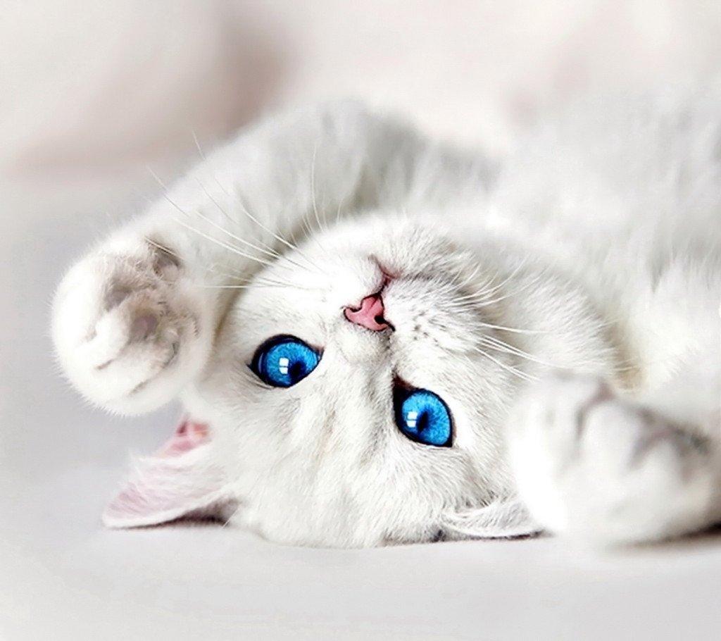 Kedilerle İlgili İlginç Bilgiler III