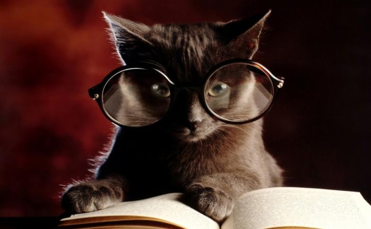 Kedilerle İlgili Kitaplar