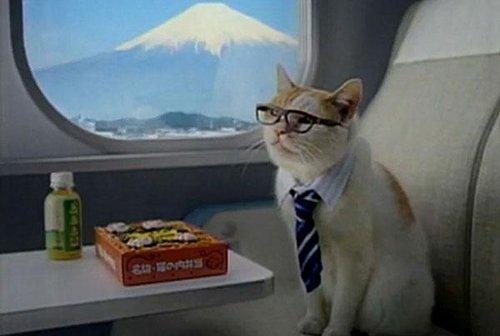 Kedilerle Uçak Yolculuğu