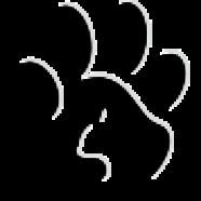 gizmocaa